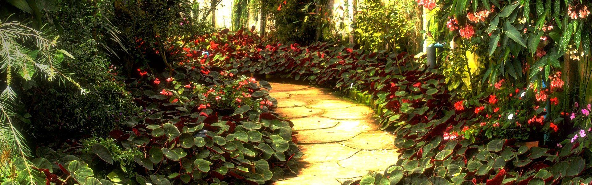 geschwungener Weg mit vielen Blätterpflanzen drumherum und kleinen Blüten_compose.jpg